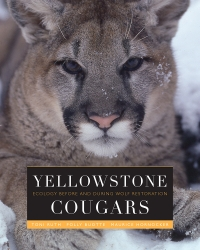 Yellowstone Cougars